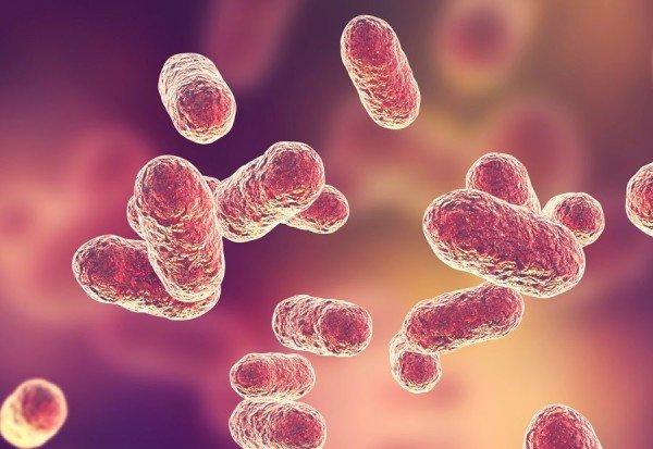 qué es la microbiota vaginal