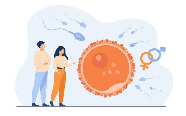 Probióticos para mejorar fertilidad femenina